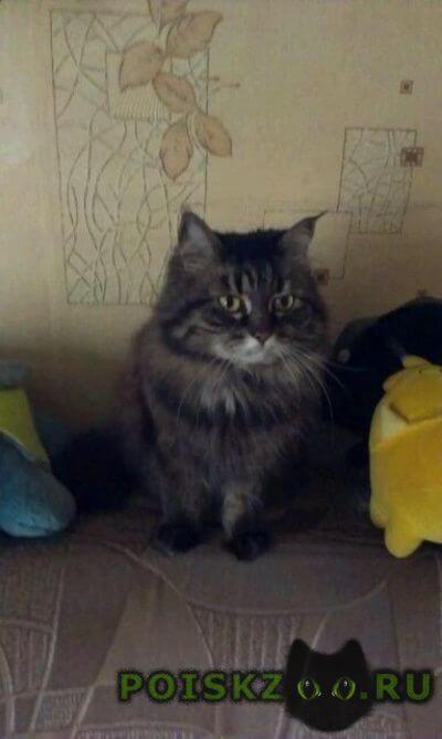 Пропала кошка 27.09.2016 г.Нахабино