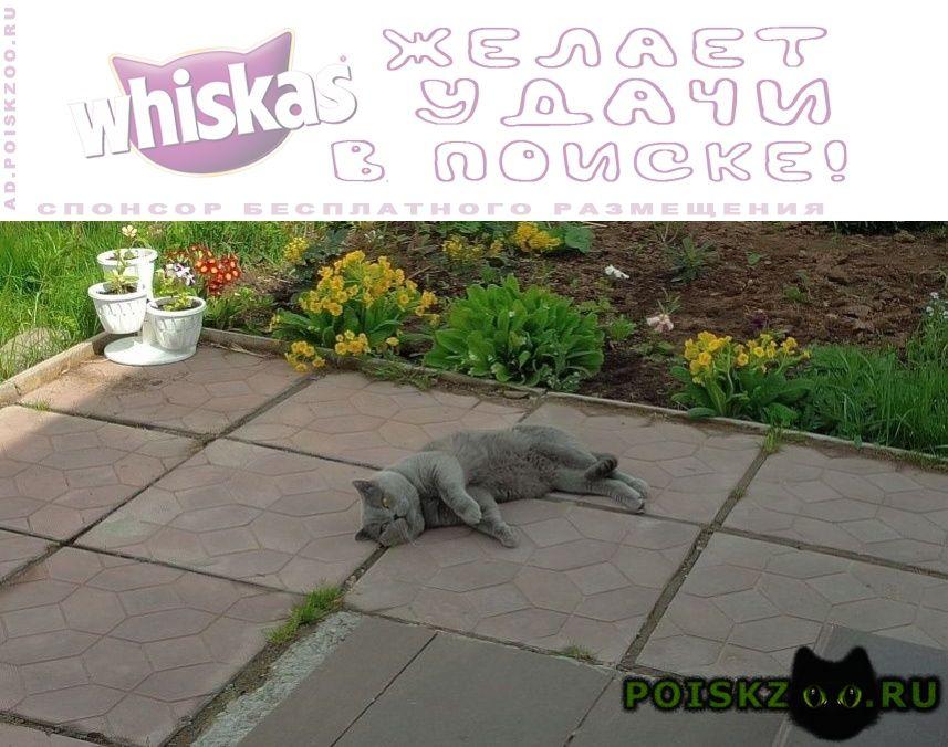 Пропал кот. г.Ногинск