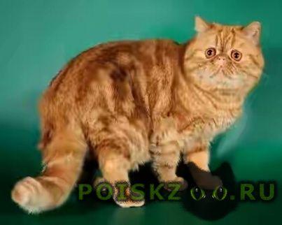 Пропала кошка г.Воронеж