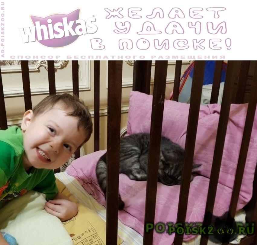 Пропал кот британец г.Красноярск