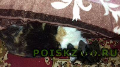 Пропала кошка помогите г.Малаховка