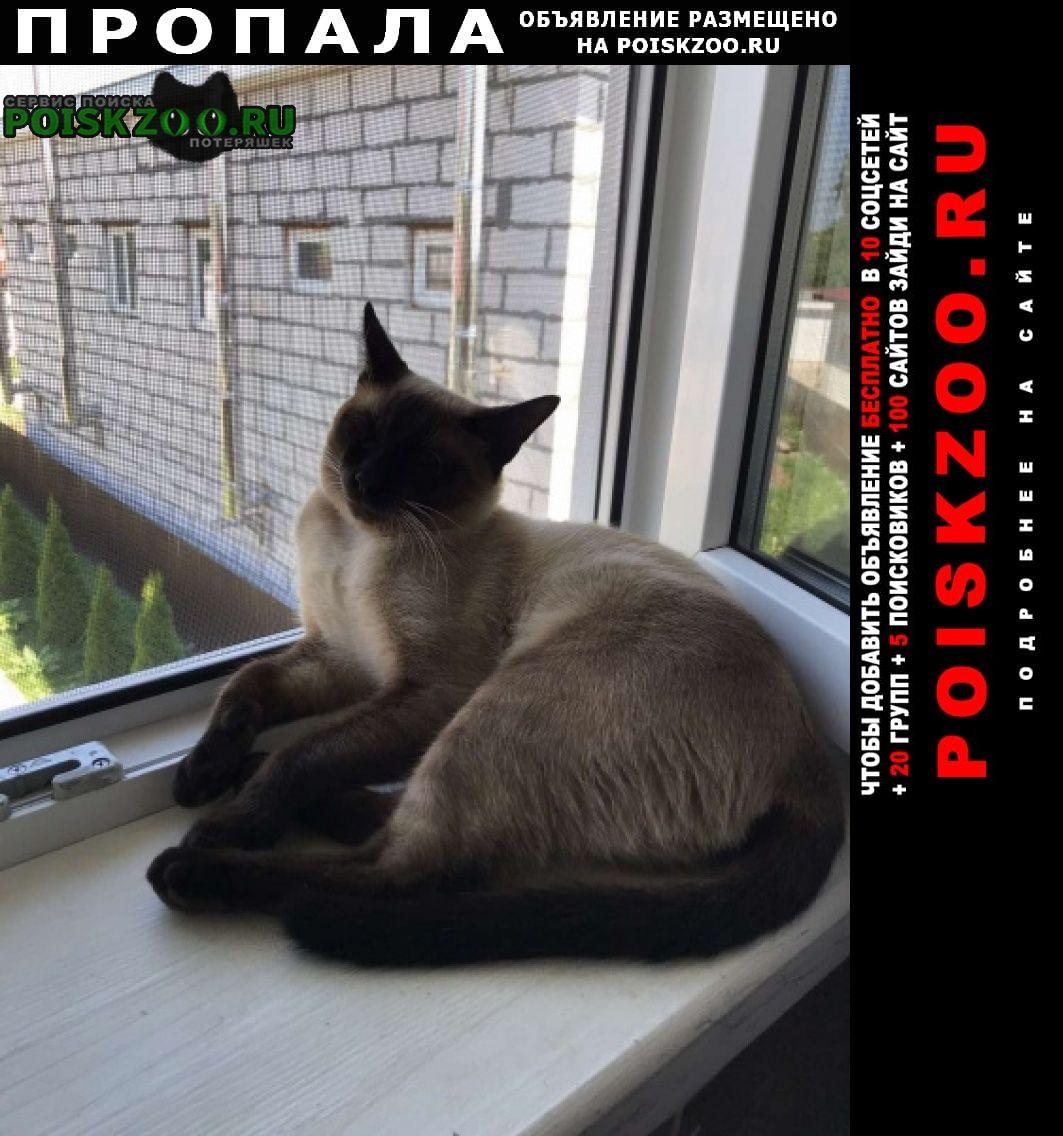 Пропал кот сиамский ик Кстово
