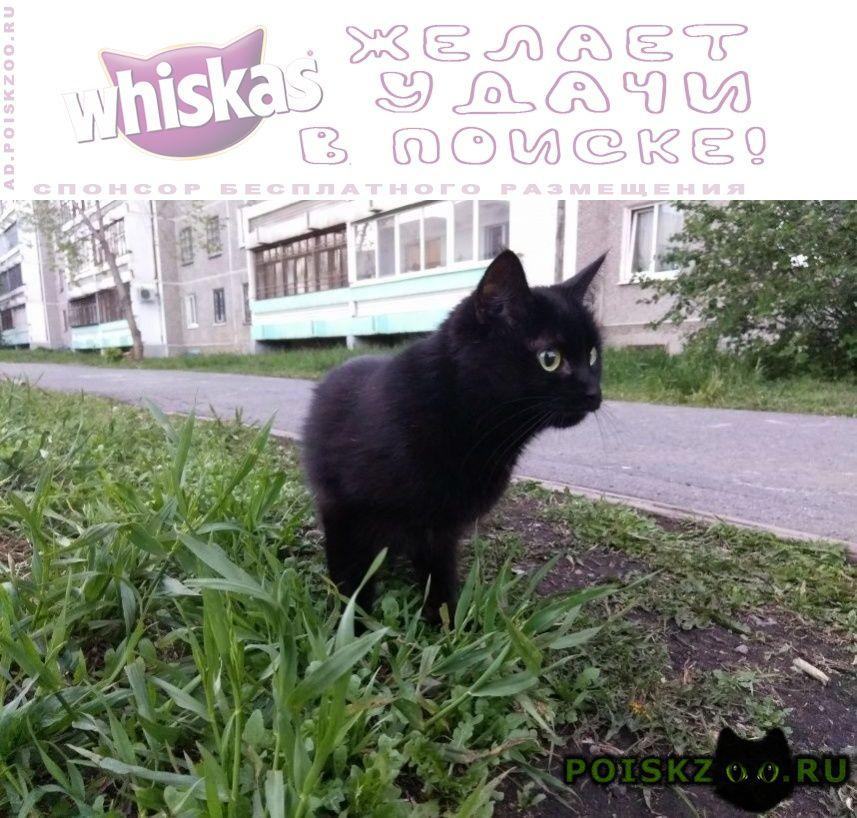 Пропала кошка черного цвета г.Екатеринбург