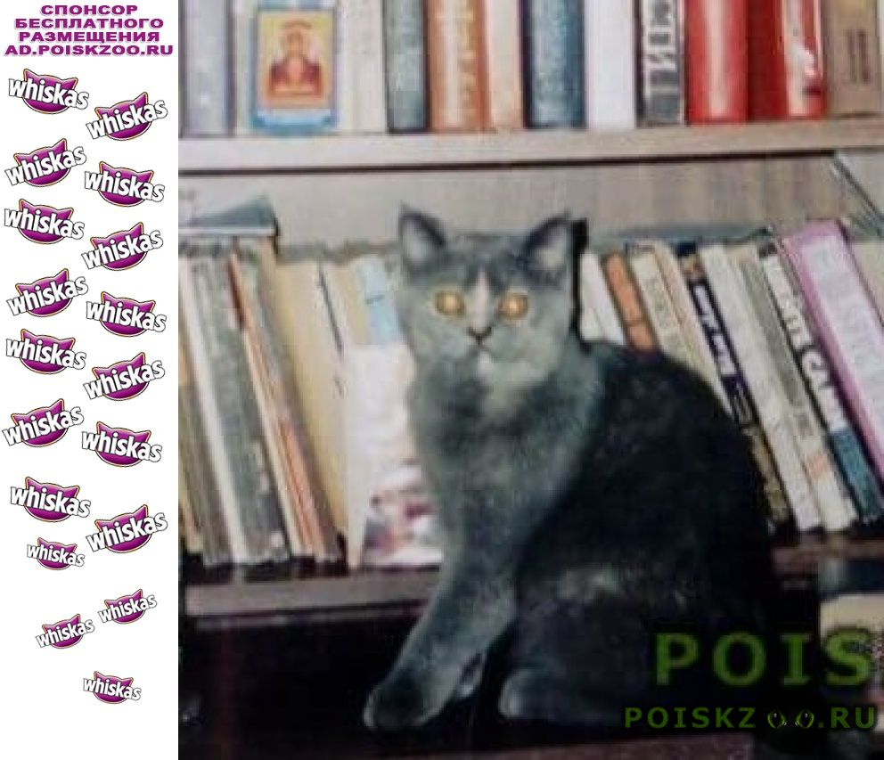 Пропала кошка г.Магнитогорск