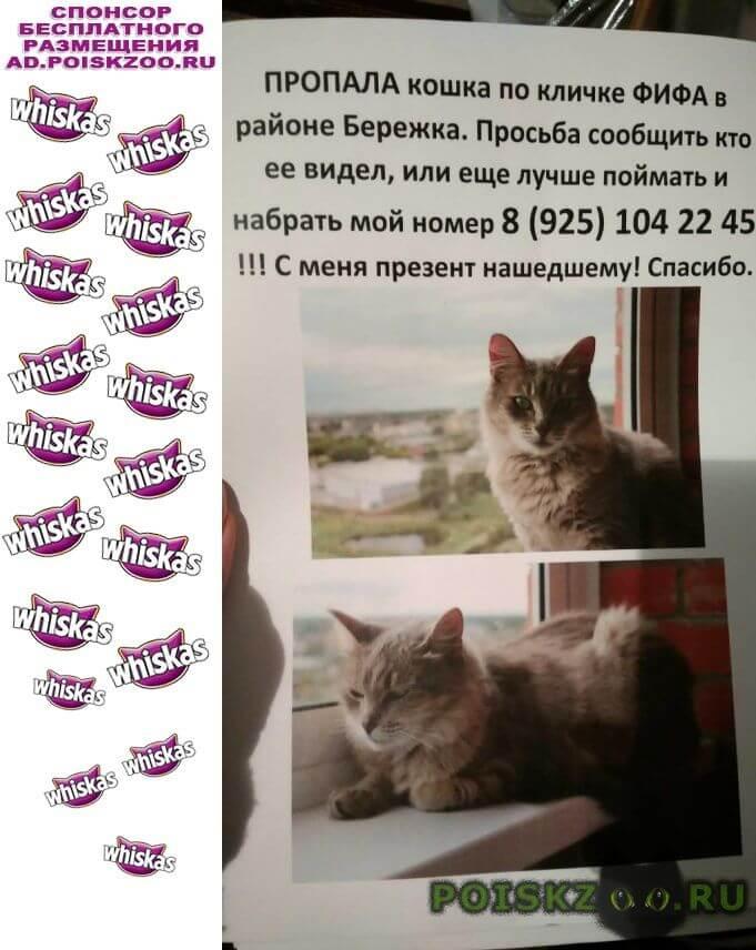 Пропала кошка г.Ивантеевка (Московская обл.)