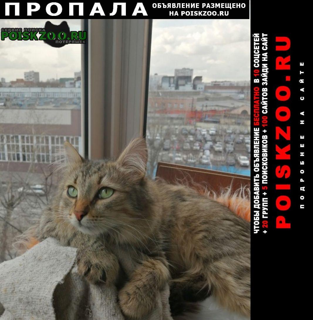 Пропал кот помогите найти питомца Москва