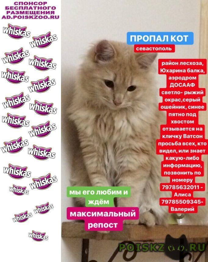 Пропал кот молодой г.Севастополь