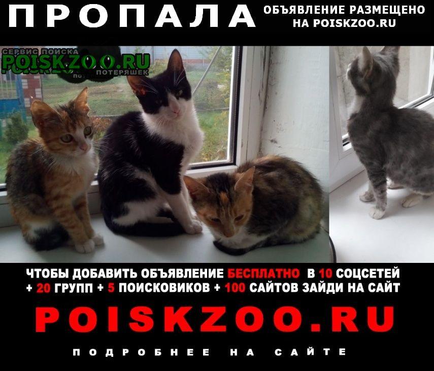 Пропала кошка (1 котик и 3 кошечки) Анапа
