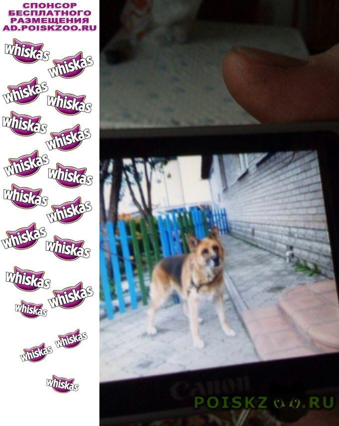 Пропала собака г.Абакан Хакасия