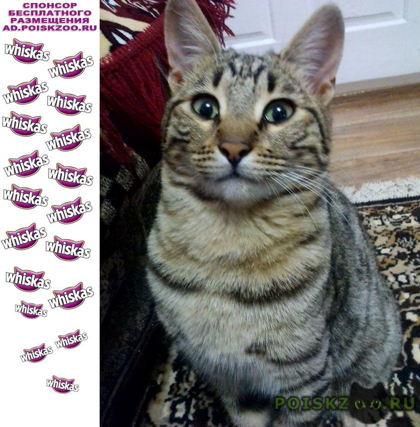 Пропал кот г.Старощербиновская