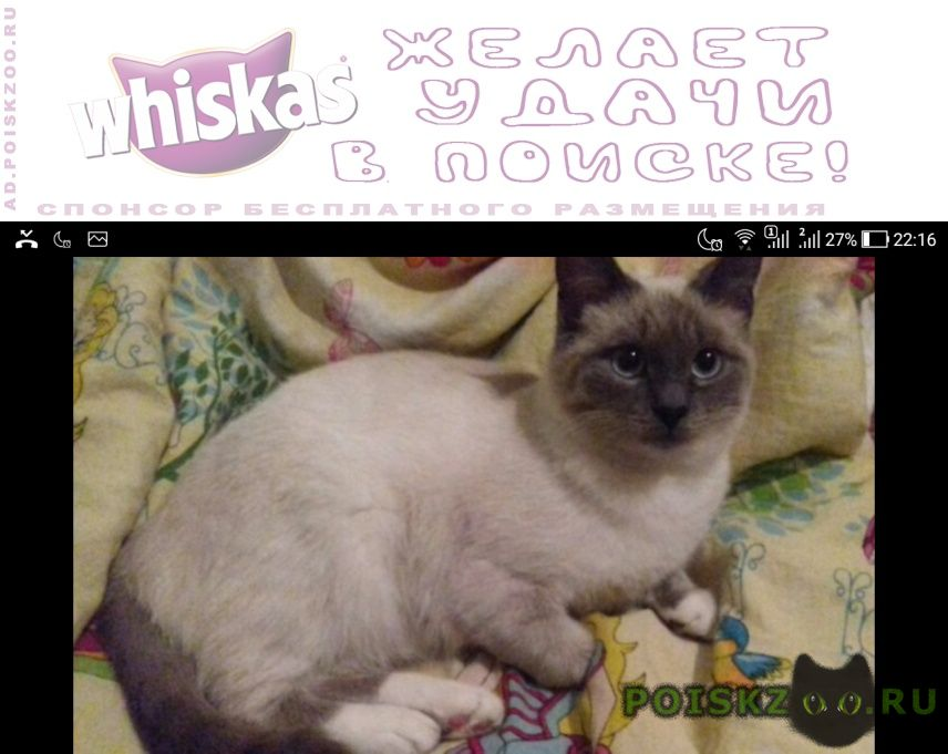 Пропала кошка г.Воскресенск