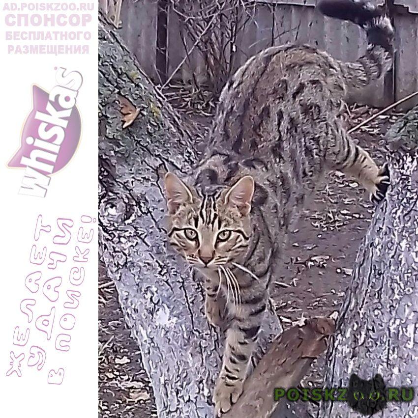 Пропал кот бенгальский бася (барсик) г.Старощербиновская