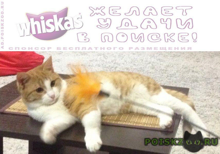Пропал кот рыжий г.Воронеж