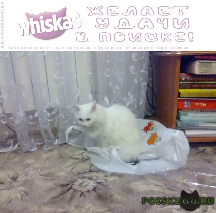 Пропал кот наш любимый ик г.Ставрополь