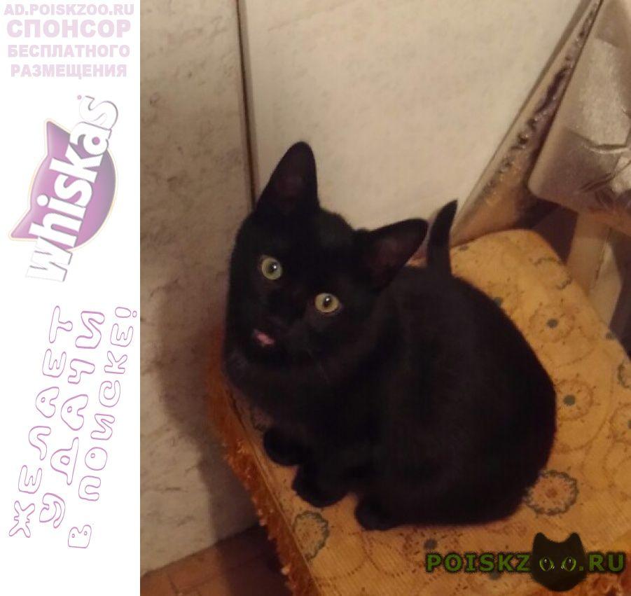Пропал кот черный . г.Афипский