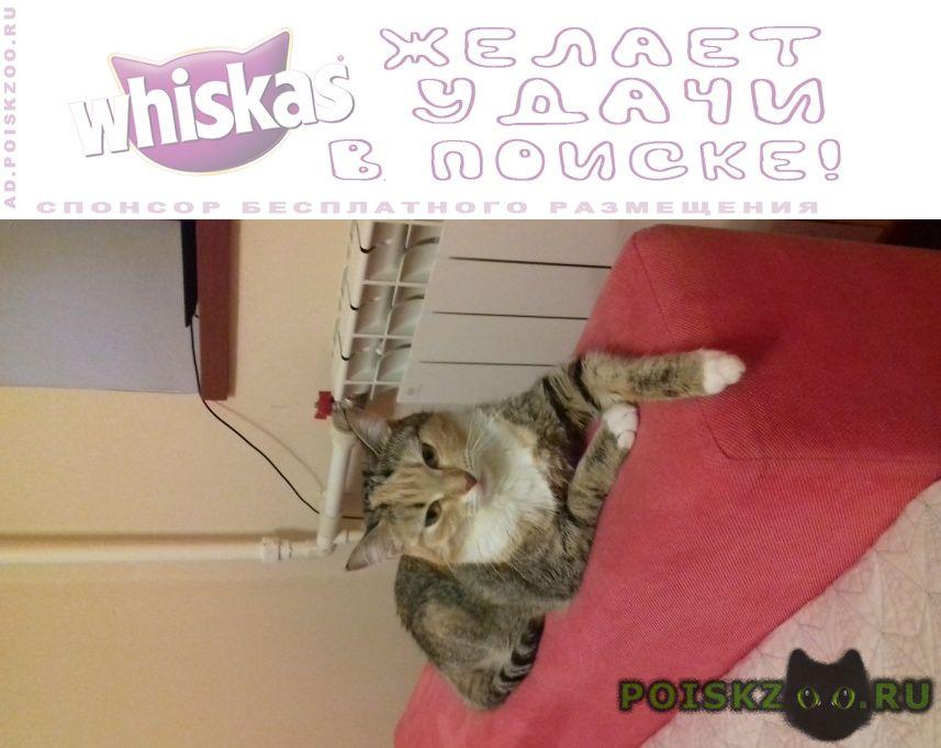 Пропала кошка г.Новосибирск
