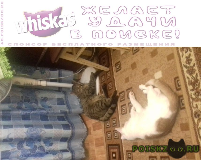 Пропал котик 11 мес г.Москва