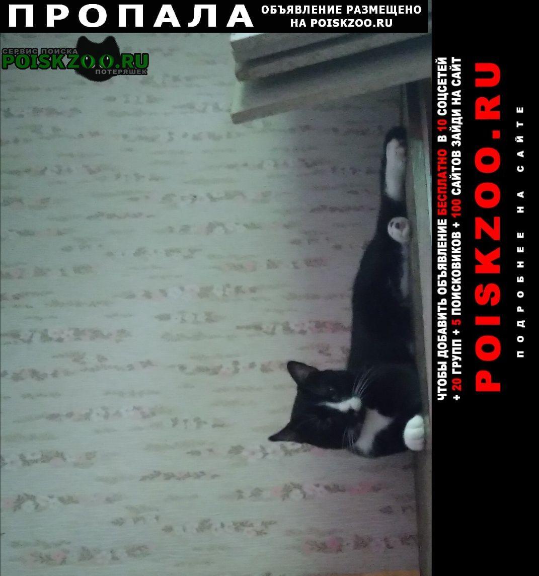 Пропал кот черно белый Санкт-Петербург