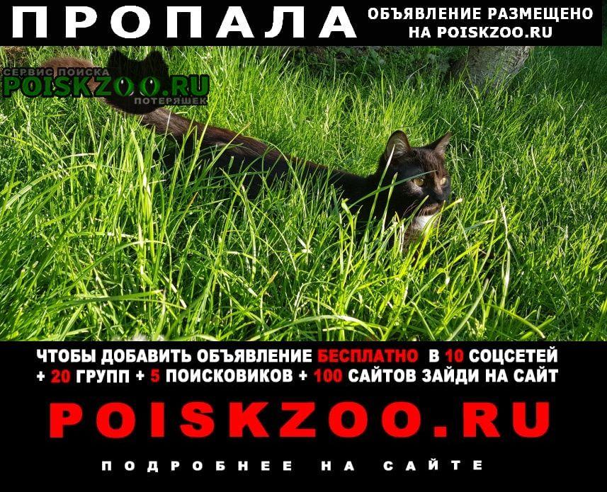 Пропал кот Ростов-на-Дону