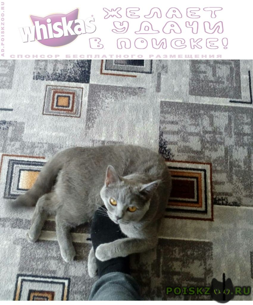 Пропала кошка в районе пашковки г.Краснодар