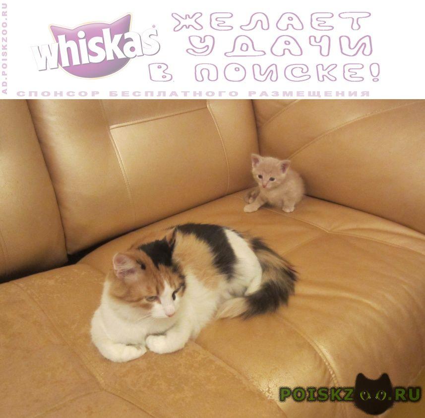 Пропала кошка пропажа кошки г.Сызрань
