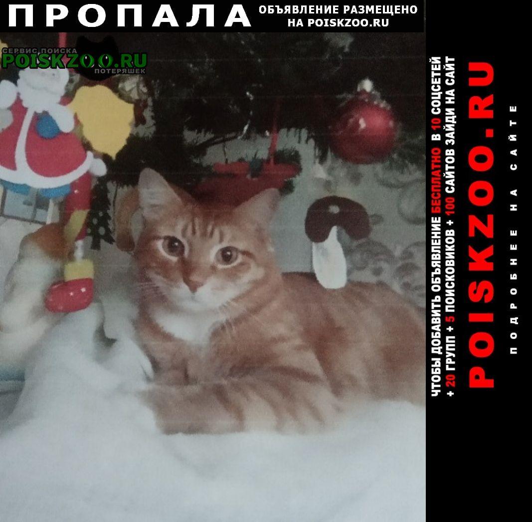 Пропал кот сема Пермь
