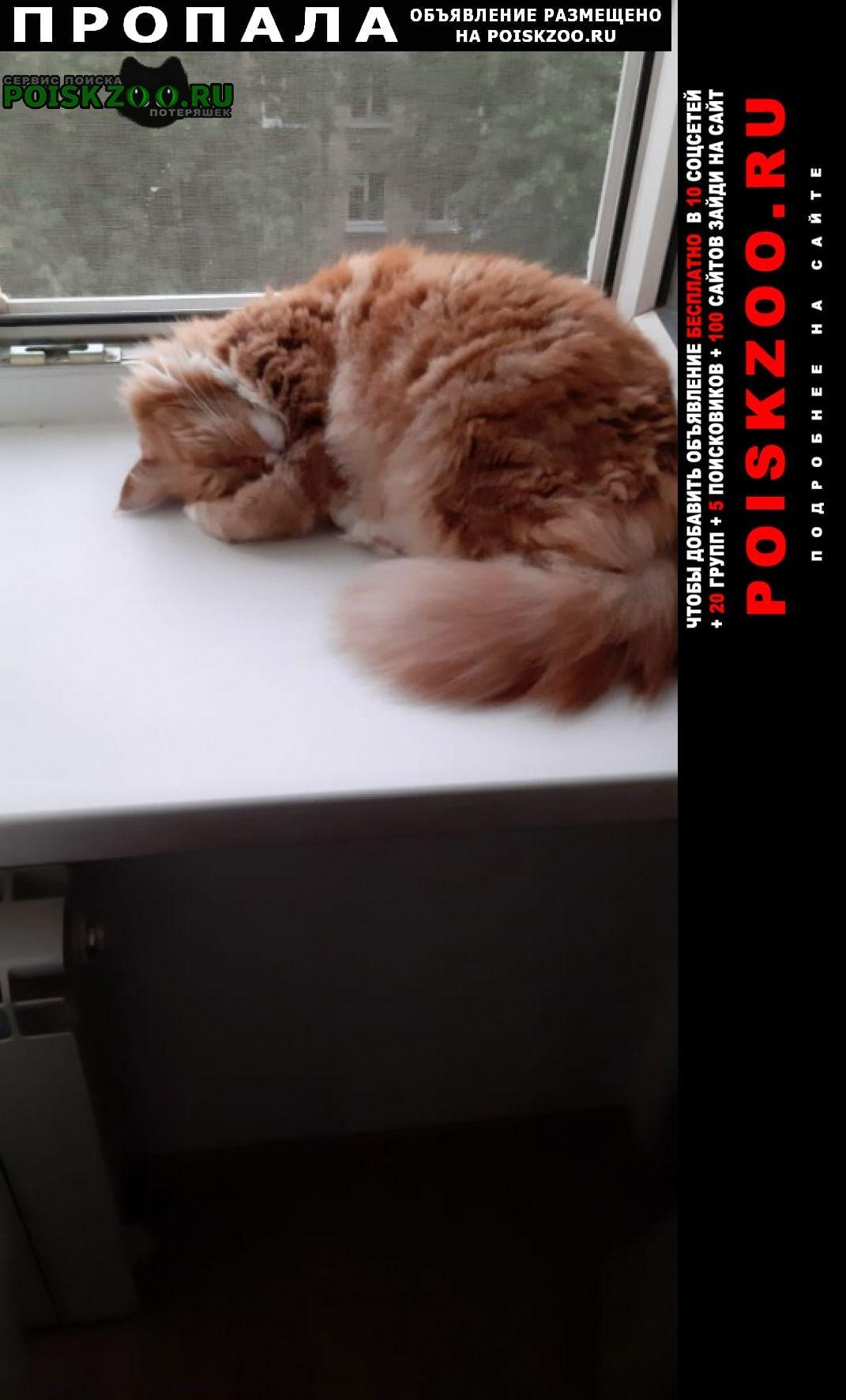 Пропала кошка пожалуйста, помогите найти нашу любимицу Санкт-Петербург