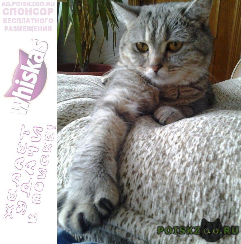 Пропала кошка помогите найти кошку г.Псков