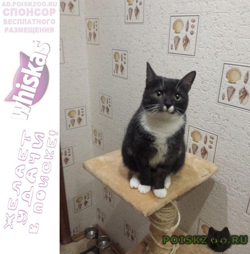 Пропала кошка помогите найти фросю г.Санкт-Петербург