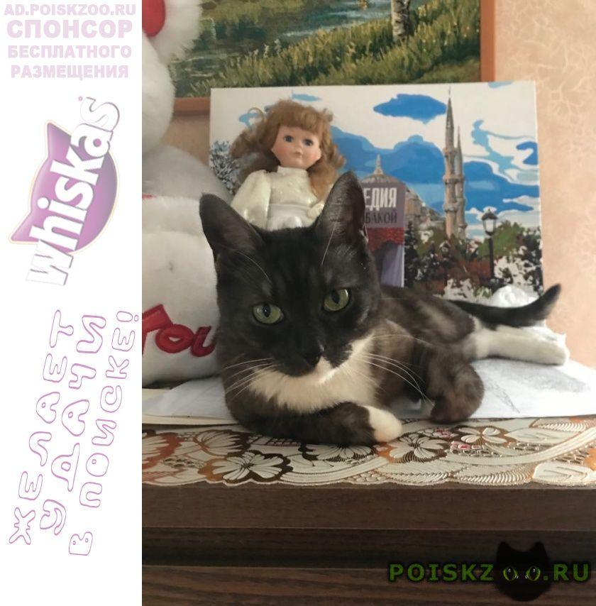 Пропала кошка  г.Апрелевка