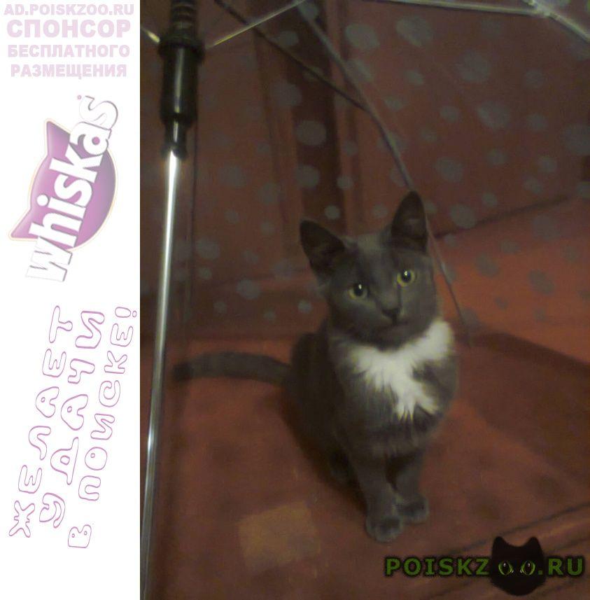 Пропала кошка г.Запорожье