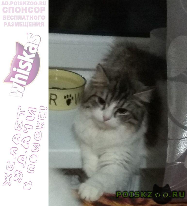 Пропала кошка ул. клубная мичурина г.Жуковский