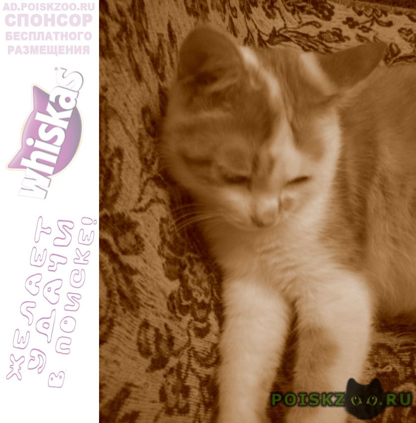 Пропала кошка г.Саранск