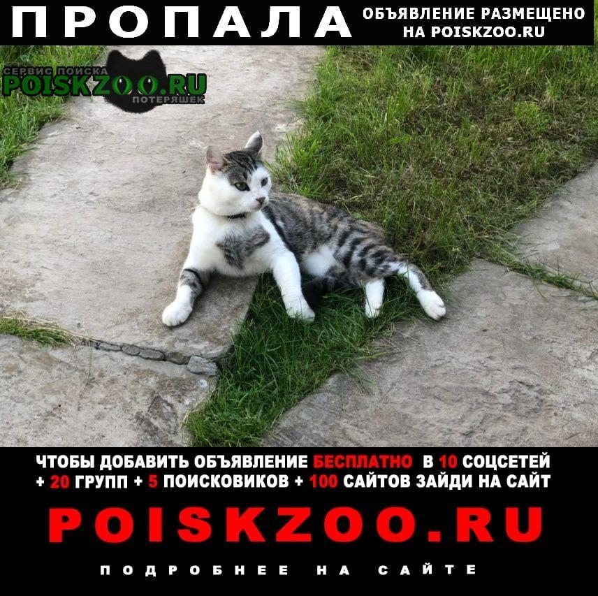 Пропал кот в районе д.крючково г. Истра
