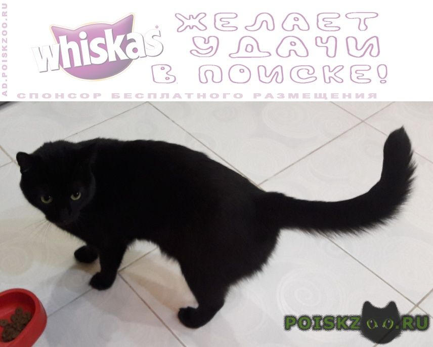 Пропал кот   г.Ульяновск