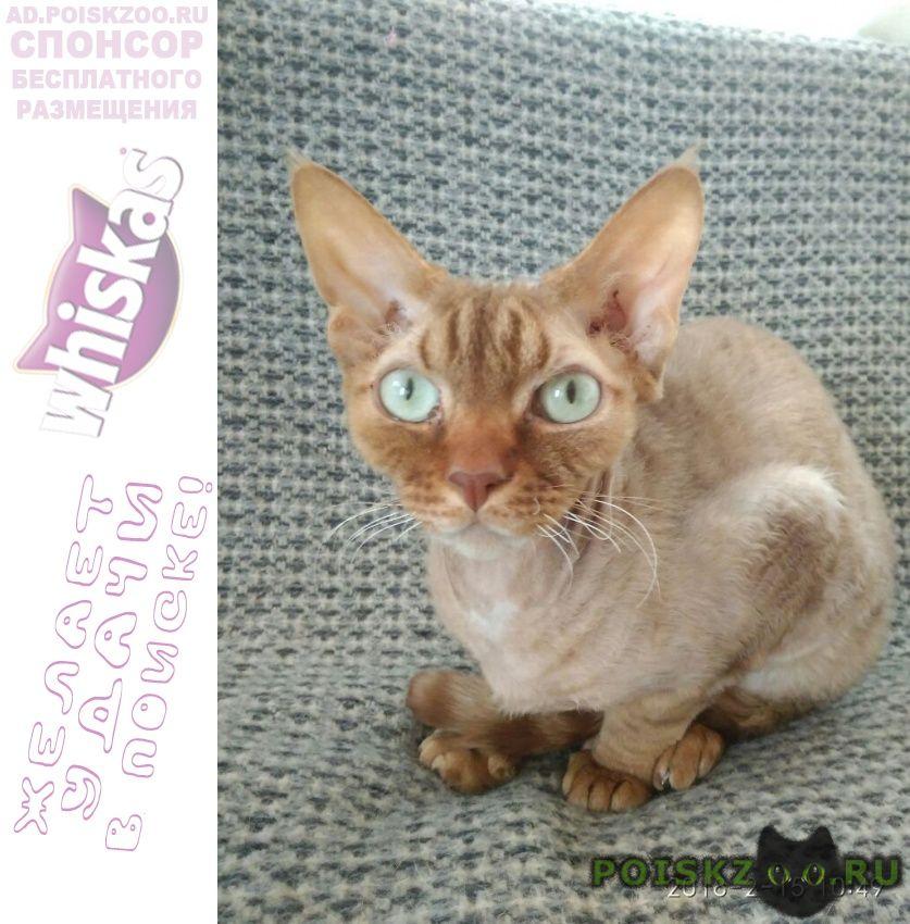 Пропал кот короткошерстный г.Одинцово