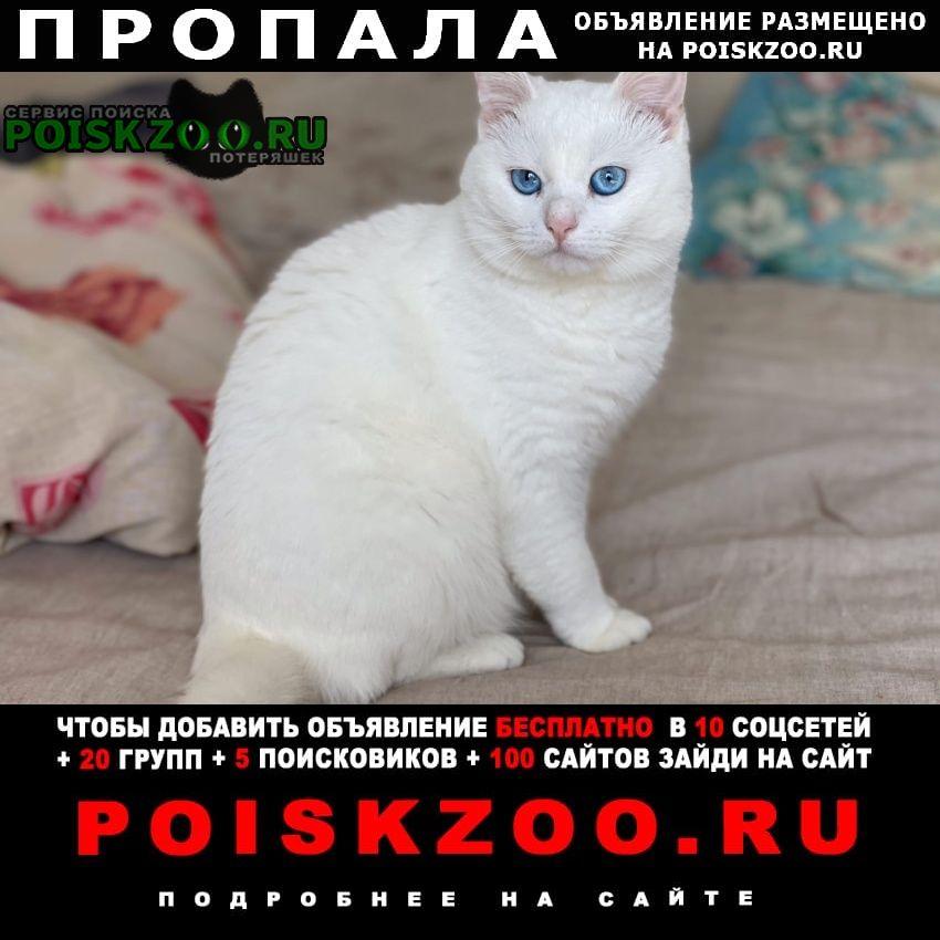 Пропала кошка Нерехта
