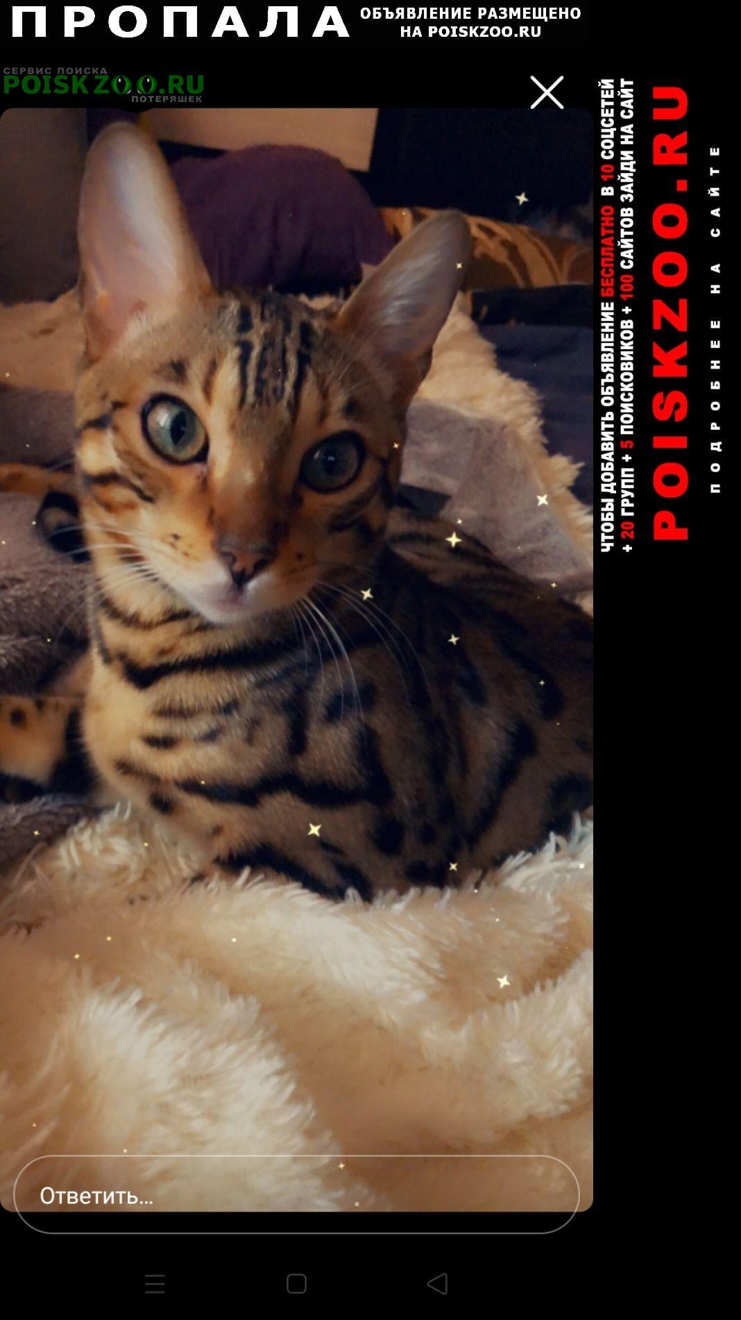 Пропал кот порода бенгал Иркутск
