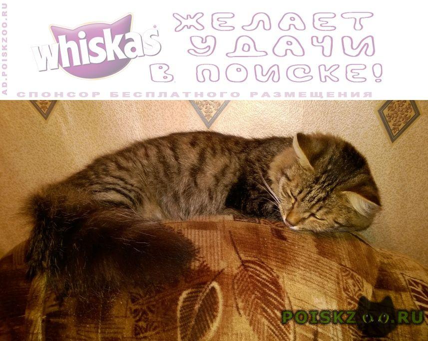 Пропал кот 4 года бусый с пушистым хвостом г.Пермь