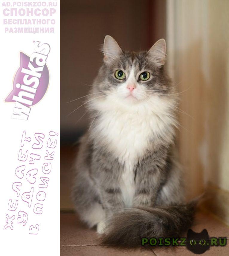 Пропала кошка помогите найти г.Воскресенск