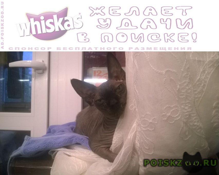 Пропал кот снт прожектор г.Волоколамск