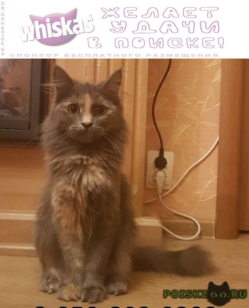 Пропала кошка г.Липецк