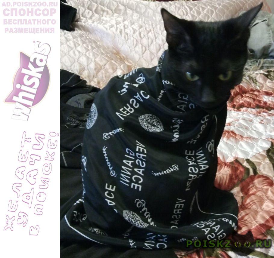 Пропала кошка маленькая чёрная г.Мензелинск