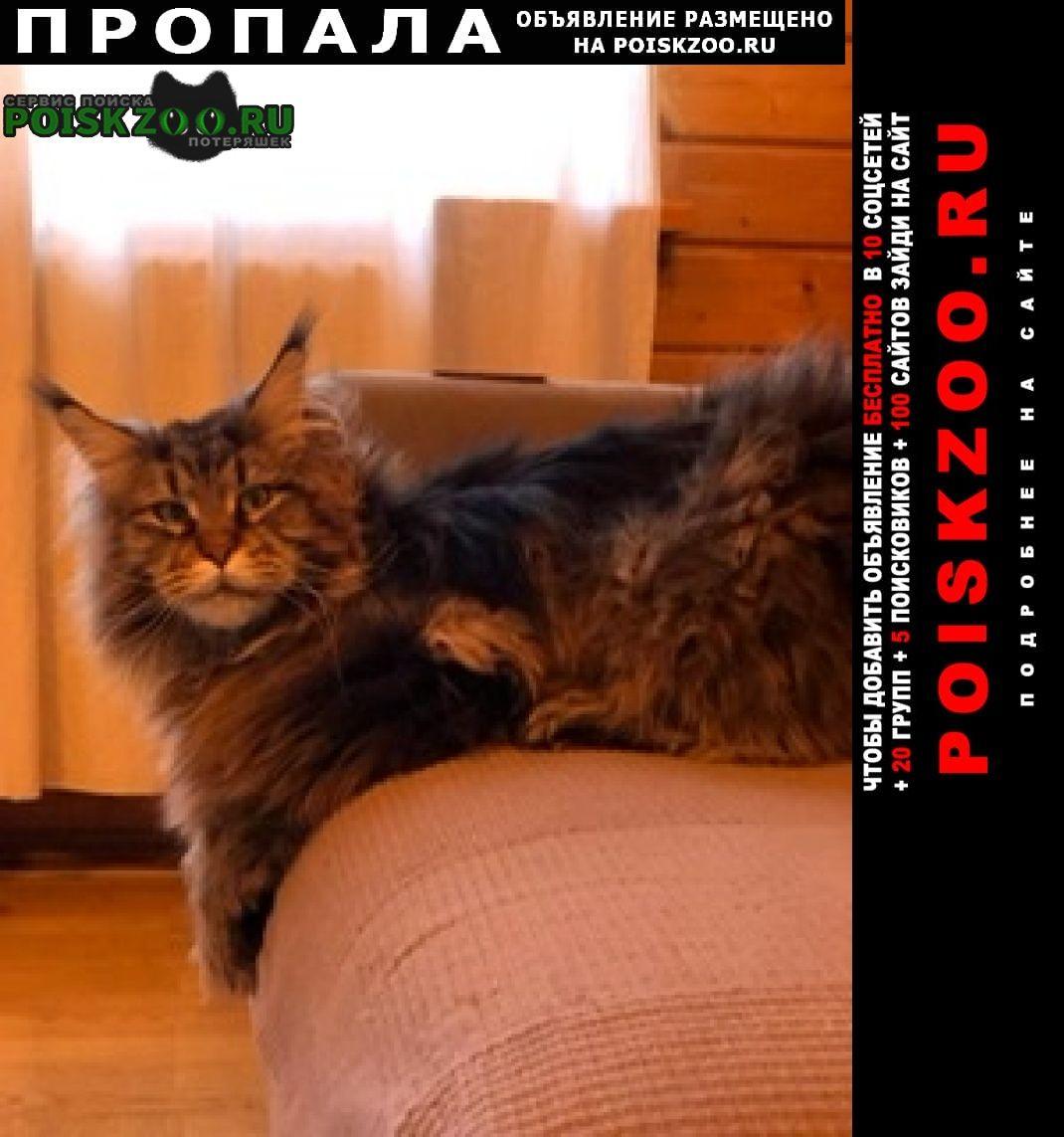 Пропал кот Одинцово