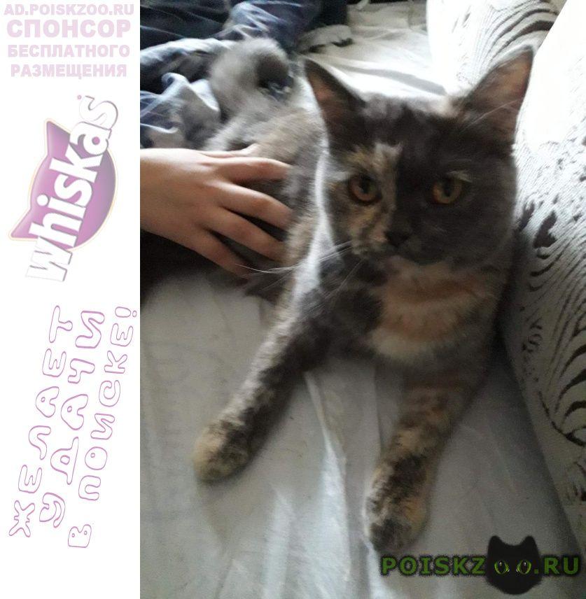 Пропала кошка котя г.Астрахань