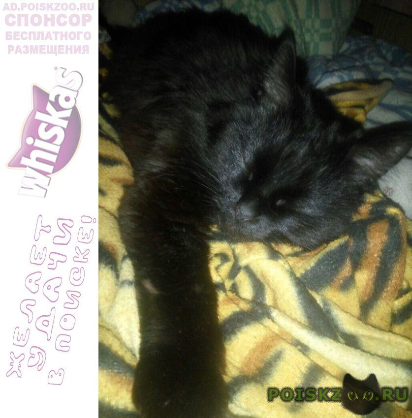Пропала кошка помогите, пожалуйста, найти девочку г.Москва