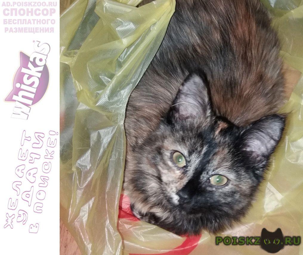 Пропала кошка в районе махалина потерялась кошечка г.Дмитров