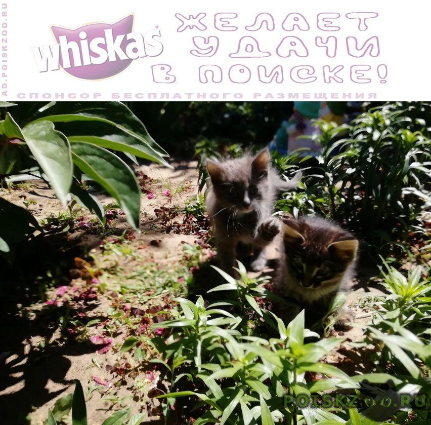 Пропала кошка потерялись два котенка г.Волгоград