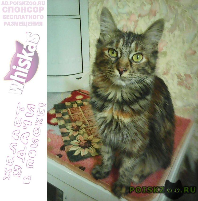 Пропала кошка шипиловский проезд г.Москва