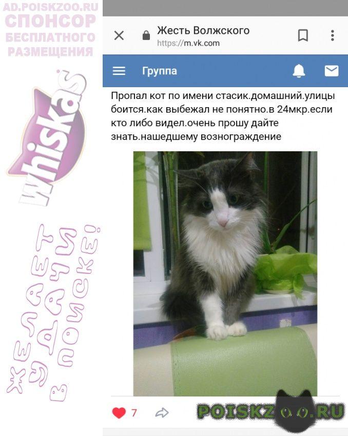 Пропал кот домашний г.Волжский (Волгоградская обл.)
